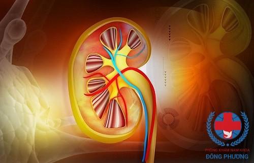 Suy giảm hồng cầu là 1 trong các nguyên nhân suy thận dẫn đến thiểu máu